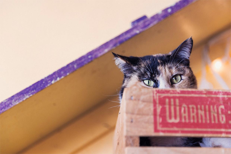 eine katze kuckt aus der kiste